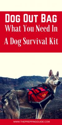 Dog survival kit
