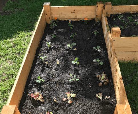 vegetable gardening in boxes