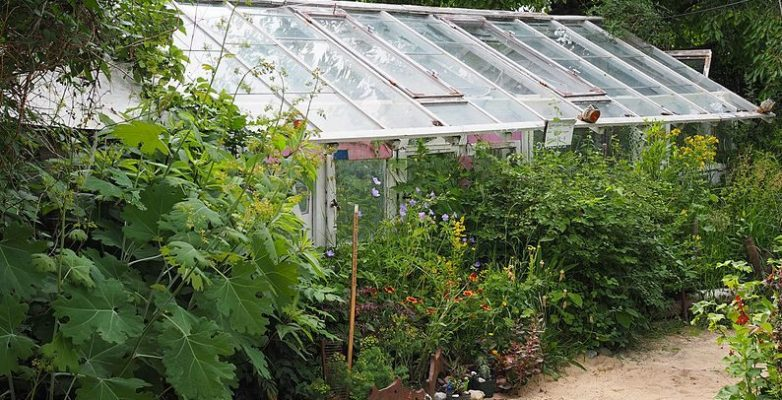 What size survival greenhouse should you have?