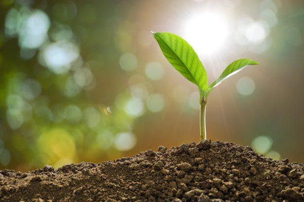 Plant Energy